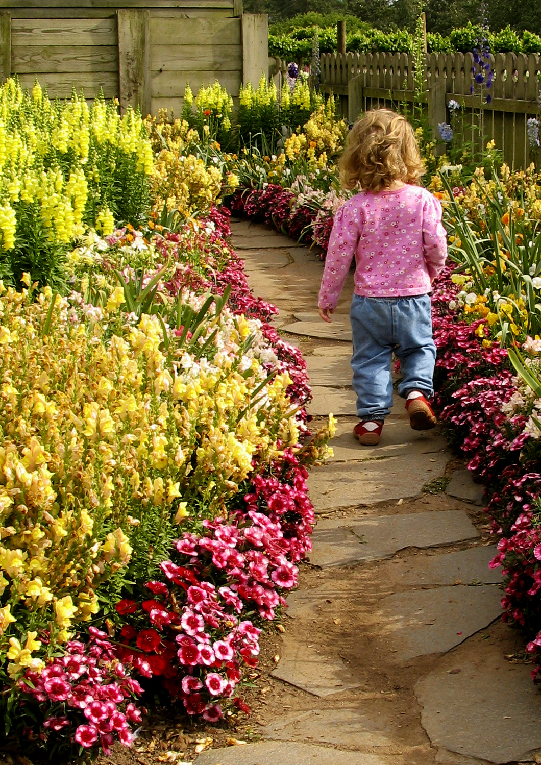 Child walking through flowered paved path
